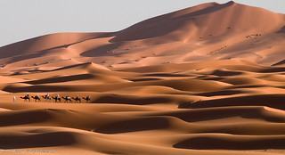 Camel Train on the Dunes | by tootingTAFF