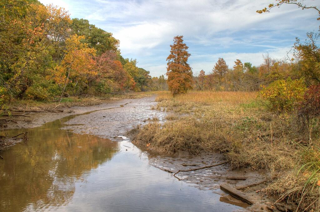 Theodore Roosevelt Island Swamp