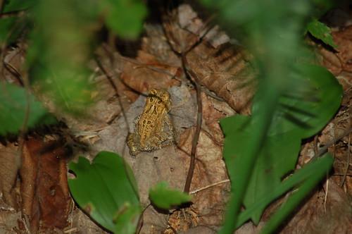 toad | by Ketzirah & Art
