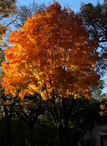 Fall is Here   by A Gude