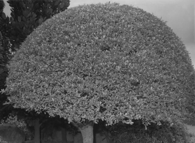Taipei tree