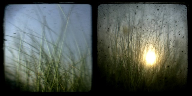 dune grass, different day, diptych