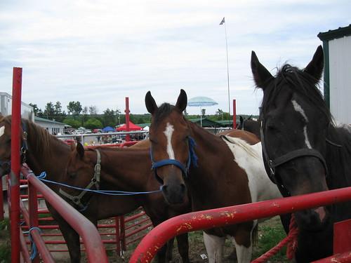 Horses for sale | by Quevillon