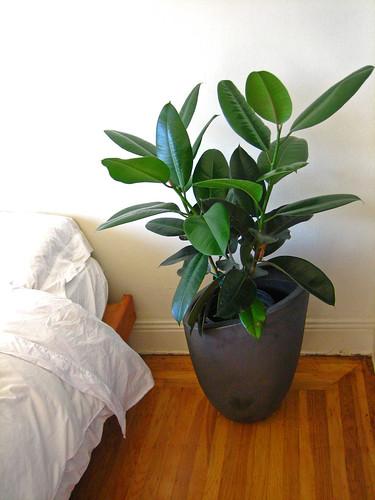 New Plant! Yes! | by margaretshear
