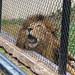 Hope Zoo Sep 2016-9.jpg