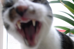 blurry close-up of cat mouth