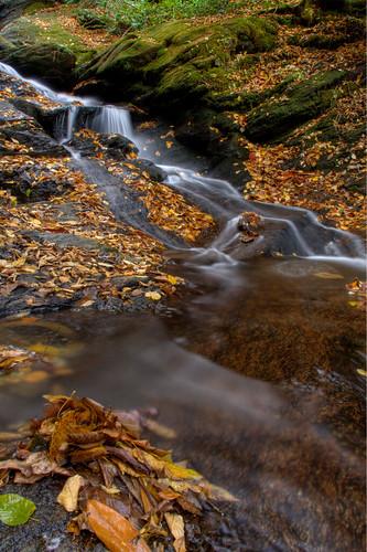 longexposure autumn fall water leaves rock creek waterfall leaf nc rocks stream northcarolina swirls hdr ncmountains yanceycounty ncwaterfalls roaringforkfalls davidhopkinsphotography photocontestfall10 ncpedia