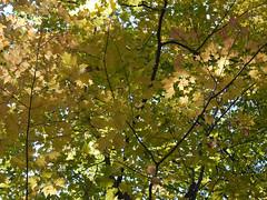 日, 2010-10-17 13:10 - 1777 TrailをDoodletownへ