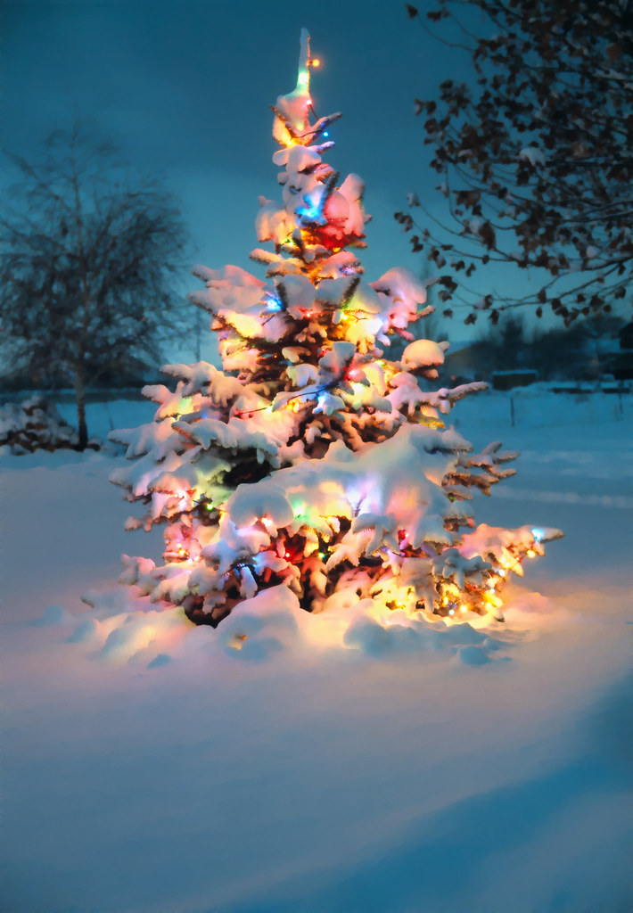 Colorful Christmas Tree Images.Snow Covered Christmas Tree With Colorful Lights Re Posted