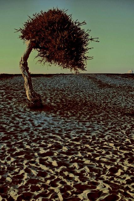 The Tree Sephirot