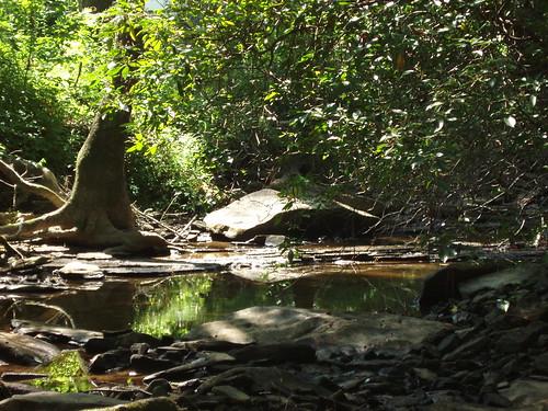 green nature creek backyard alabama