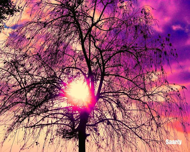 Rising in the sun