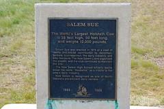 About Salem Sue