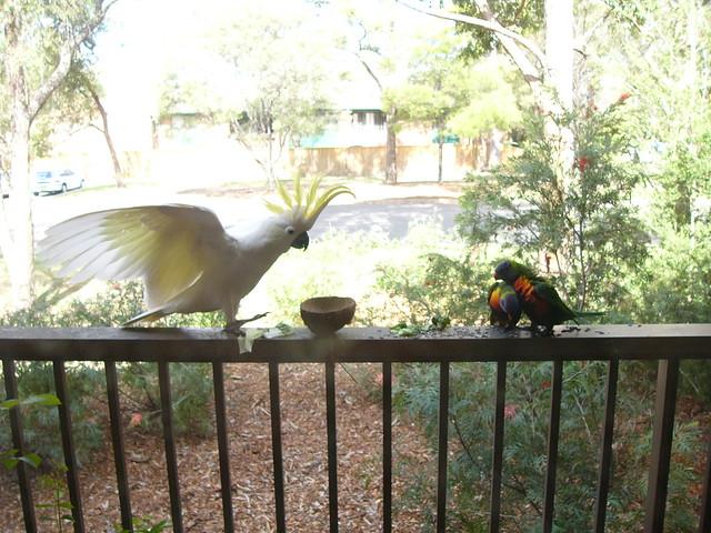 Arguing parrots