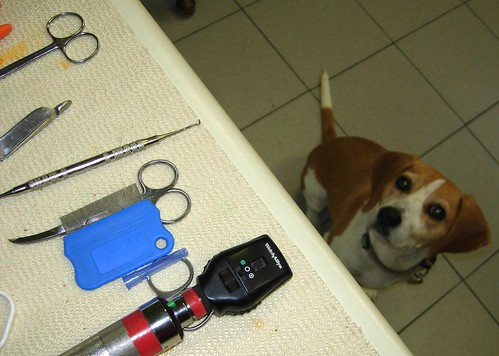 dog mutt hund chien vet medical columbia sc southcarolina medicine animal glands beagle hound anal anus butthole finger digital quick easy smelly impacted relief fur hair nose snout tail eyes camera love view see care comb flea scissors tools professional angst pain pus nasty biology anatomy science perro usc