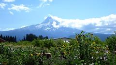 Mount Hood Fruit Loop
