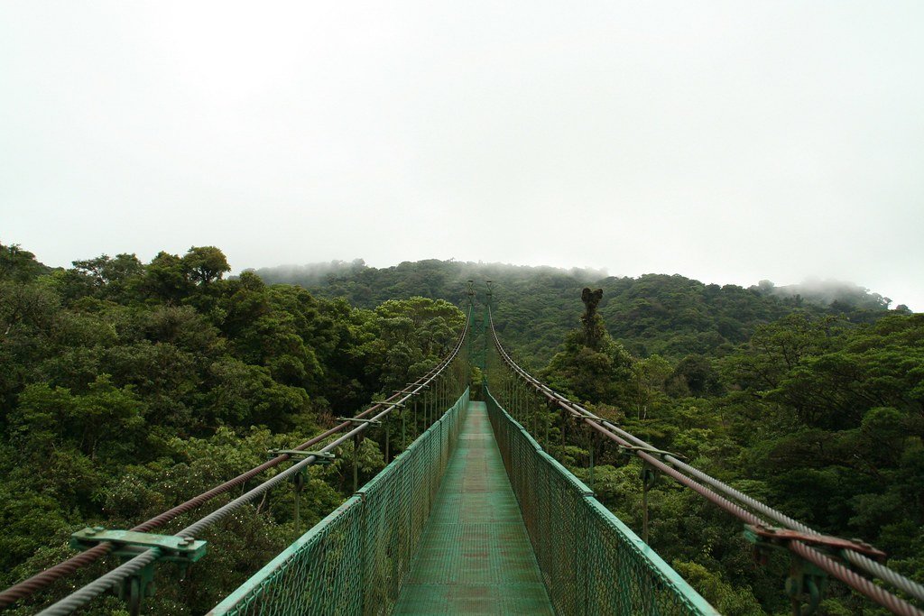 """Image result for costa rica canopy"""""""