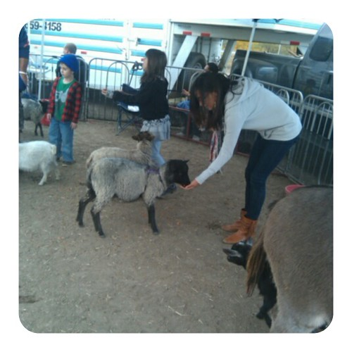 lali sheep