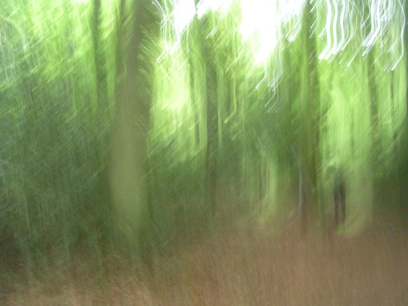 Impressionist wood Lambridge Wood to be precise. Henley Circular via Stonor.