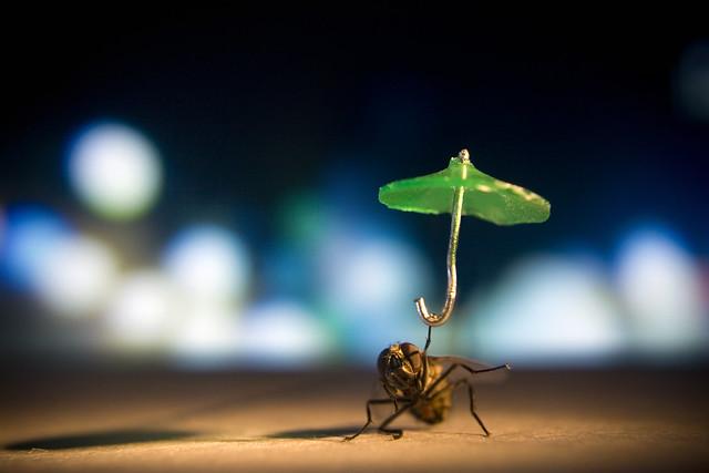 Nocturnal Raindance