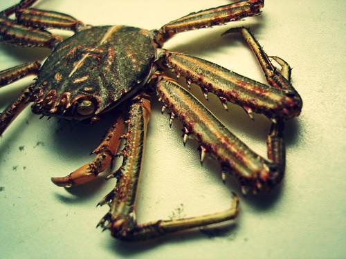 crab variation 1 | by justinhiggins