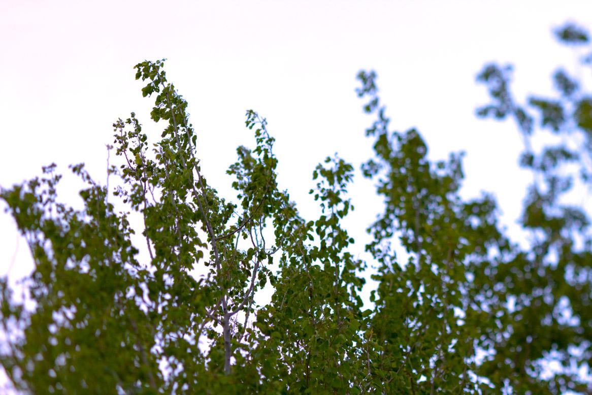 Sat, 05/08/2010 - 7:09am - tops