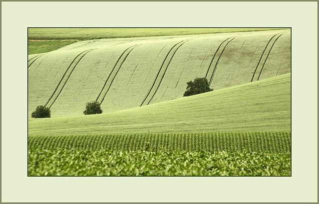 Grün..      (green..)