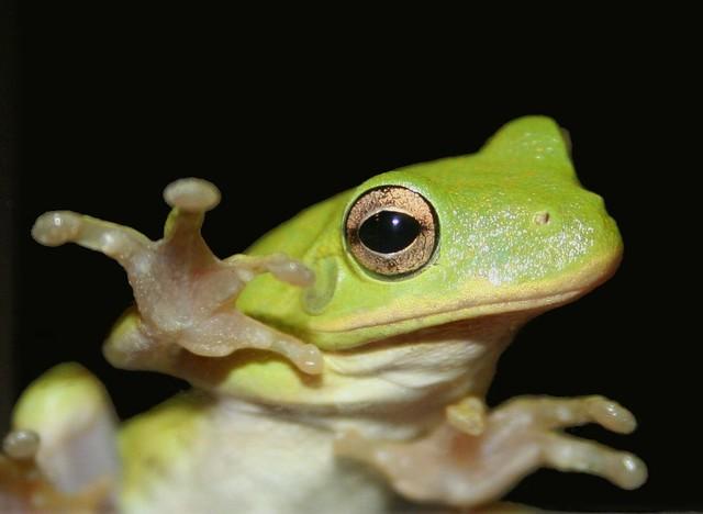 Mutant Ninja Frog This Ftog Was On Our Storm Door Looking