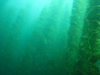 Kelp forrests | by star5112