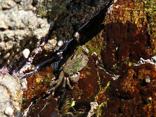 Crustacea: Malacostraca: Decapoda