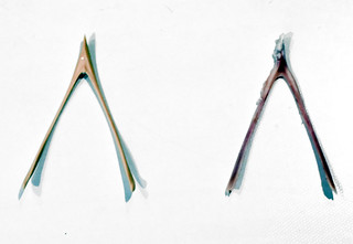 Wishbones by Comparison | by CarbonNYC [in SF!]