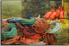 Schoodic Peninsula  Lobster Traps
