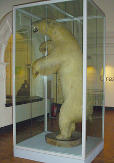 Great White Bear at the Horniman Museum | by escdotdot
