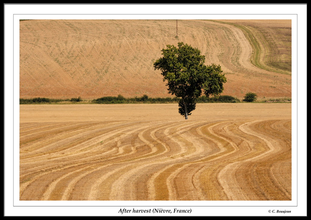 Après la moisson... (Varzy, Nièvre)