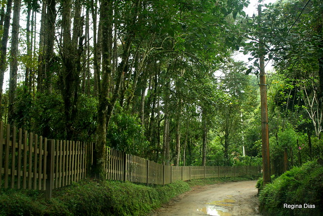 A dirt path in Maromba