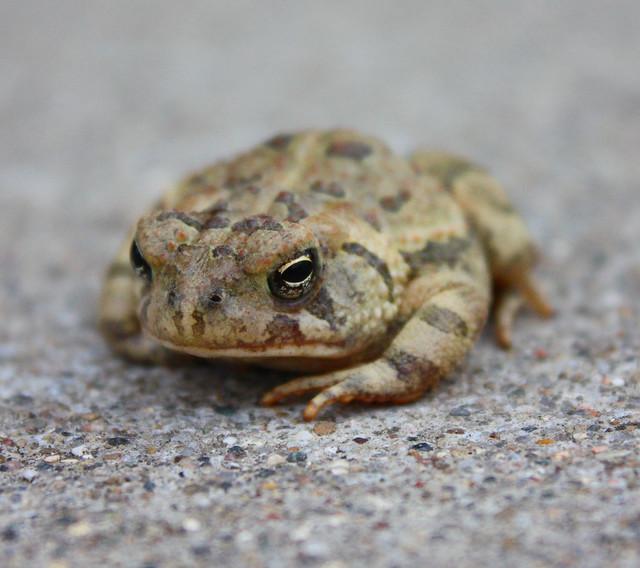Toad... Looking Grumpy