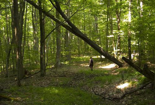 camping trees hiking nationalforest westvirginia monongahelanationalforest