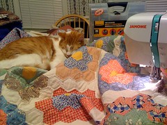 Tenzing is determined to stay on this quilt. Sometimes it is easier to just work around him.