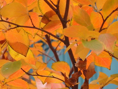 "city blue autumn trees light urban orange color colour fall nature leaves boston closeup geotagged ma photography photo sony newengland cybershot foliage bostonma southend backbay sonycybershot bostonist bay"" masschusetts ""south lurvely ""back 02116 end"" thatsboston dschx5v hx5v brooksbos"