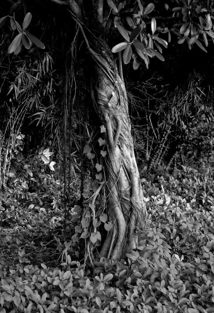 thailandtrees-9