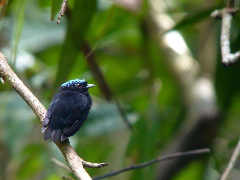 stubby bird