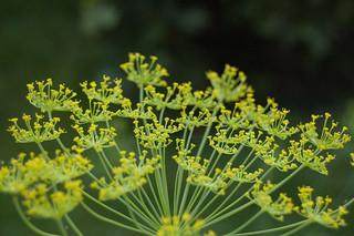 Herbs   by Denis Defreyne