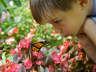 Boy with Monarch Butterfly   by USFWS Headquarters