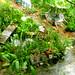 Karin's Backyard in the Rain