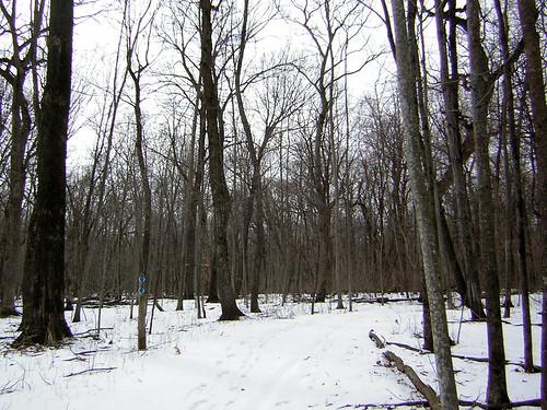 snow hiking nerstrandbigwoodsstatepark