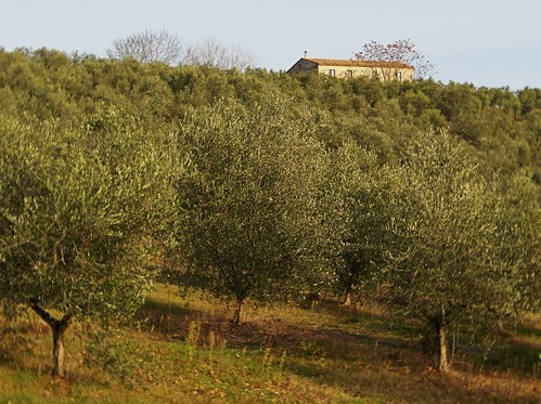 Olivetrees Uliveto HDR | by pizzodisevo 1937