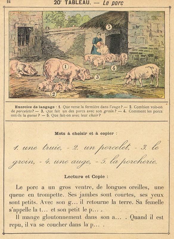 vocab 20 cochon