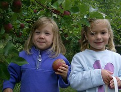 FriendsWithApples by Lyme Nursery