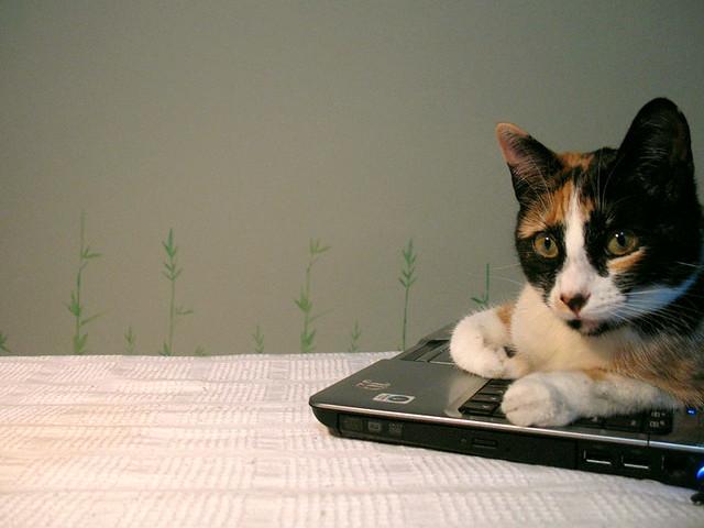Cat-woop music