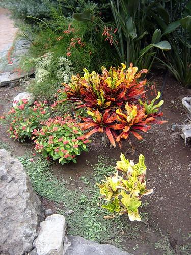Palmitos Park - Flowers | by elsua